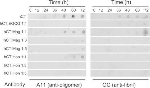 Inhibitory effects of magnolol and honokiol on hCT oligomerization and fibrillation detected by dot blot.