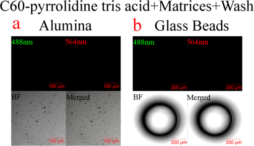 Non-stickiness of C60-pyrrolidine tris acid monitored by Confocal Laser Scanning Microscopy following several washes.Fluorescence microscopy indicates that fBSA labelled C60-pyrrolidine tris acid has no adherence to alumina (a) and glass beads (b), which are clearly present in bright field microscopy.
