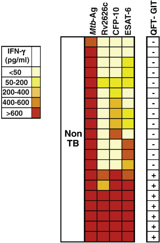 Heat map for IFN-γ responses to Mtb-Ag, Rv2626c, CFP-10 and ESAT-6 M. tuberculosis antigens in subjects without active tuberculosis.Heat map showing the IFN-γ responses to Mtb-Ag, Rv2626c, CFP-10 or ESAT-6 antigens as measured in cell free supernatants of peripheral blood mononuclear cells (PBMCs) from subjects without active tuberculosis (non-TB; n = 20). Colors represent pg/ml of IFN-γ produced in each individual, where high values are shown in red and low values in light yellow, as shown in the figure scale. Right column displays the result of QuantiFERON-TB Gold In-tube (QFT-GIT) test.