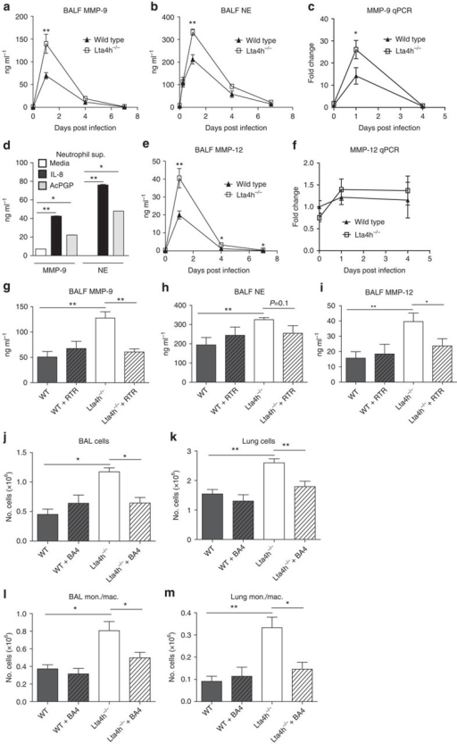 Augmented macrophage inflammation in Hib-infected lta4h−/− mice secondary to PGP accumulation and protease discord.Lta4h−/− mice and littermate controls were infected intranasally with 1 × 107 Hib and levels of total MMP-9 (a) and NE (b) were assessed by ELISA in the BALF. Levels of MMP-9 mRNA were assessed in lung tissue by real-time PCR (c). Bone marrow neutrophils were incubated with media alone, IL-8 or AcPGP, and levels of MMP-9 and NE were assessed in the supernatant after 15 min (d). Levels of MMP-12 protein in the BALF were assessed by ELISA (e) and MMP-12 mRNA levels in lung tissue assessed by real-time PCR (f). Lta4h−/− mice and littermate controls infected intranasally with 1 × 107 Hib were administered vehicle or RTR peptide, and the concentration of MMP-9 (g), NE (h) and MMP-12 (i) in the BALF was determined by ELISA at 24 h post infection. To determine the role of elastin-derived chemotactic fragments in driving cellular recruitment, lta4h−/− mice and littermate controls infected intranasally with 1 × 107 Hib were administered control or BA4 (anti-elastin) antibody, and total cell numbers in the airways (j) and lung tissue (k) enumerated at 4 days post infection. In the same experiment, the numbers of infiltrating monocytes/macrophages in the airways (l) and lung tissue (m) was determined by flow cytometry at 4 days post infection. Data (mean±s.e.m.) are combined from two separate experiments with 4–5 mice per group and are representative of 3–4 experiments (a,b,e) or are representative of at least two experiments with 5–6 mice per group (g–m). Data (mean±s.d.) are representative of three experiments with at least triplicates (d). *P<0.05; **P<0.01 using the Mann–Whitney test.