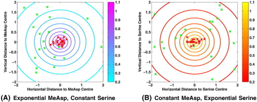 Plots demonstrating the ability of simulated E. coli cells to accumulate in response to both MeAsp and serine concentration gradients. Shown here are typical cases in which both MeAsp and serine are present within the same domain. In (A) we consider a constant concentration of serine across the whole domain, thus demonstrating the ability of simulated cells to respond to a MeAsp concentration gradient. In (B) we consider a constant concentration of MeAsp across the entire domain, thus showing that cells are able to respond to a serine concentration gradient. Within each plot green and red crosses indicate the starting and final locations of each simulated cell, respectively whilst contour lines and colour bars show the concentration of the non-constant ligand across the domain. (For interpretation of the references to colour in this figure legend, the reader is referred to the web version of this article.)