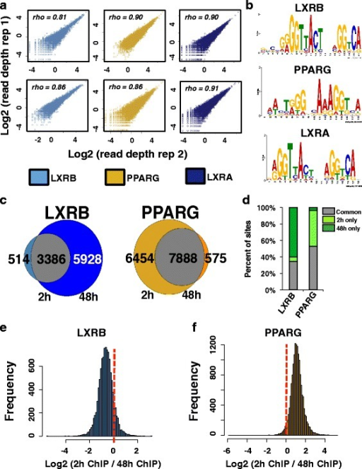 Genome-wide binding profiles of LXRs and PPARG. a Normalized sequencing read depth rank correlation (top left) at all ChIP-seq binding sites identified across replicate LXRB (light blue), PPARG (gold), and LXRA (dark blue) ChIP-seq experiments after 2 and 48 h of drug treatment. The top panel shows 2-h drug treatment replicate ChIP-seq comparisons while the bottom panel displays 48-h comparisons. b Enriched canonical LXR and PPARG motif identified in corresponding ChIP-seq data. c Venn diagram comparisons of binding events between 2 and 48 h of drug treatment. Overlapping sites are shown in gray, while sites identified at only 2 or 48 h are shown at the left and right, respectively. The number of sites in each category is presented for each category. d The percentage of all LXRB and PPARG sites that were identified at 2 h only (light green), 48 h only (dark green), and common to both time points (common, gray). e Read depth ratios (x-axis) at all LXRB binding sites. Negative values highlight stronger enrichment after 48 h of GW3965 treatment while positive values denote stronger occupancy after 2 h. f Read depth ratios (x-axis) at all PPARG binding sites. Negative values highlight stronger enrichment after 48 h of rosiglitazone treatment while positive values denote stronger read enrichment after 2 h