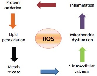 Interventions between oxidative stress and the other key factors in AD.