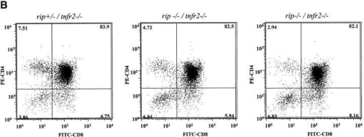 DP thymocyte survival in the absence of rip and tnfr2. To determine the contribution of TNFR2 to rip−/− thymocyte apoptosis, thymus was harvested at day 2 from rip−/−/tnfr2−/− mice and control littermates. Thymocytes were stained with PE–anti-CD4 and FITC–anti-CD8. Viable cells expressing CD4 and CD8 are shown. Six rip−/−/tnfr2−/− and 36 control littermates were analyzed. Two representative plots are shown for rip−/−/tnfr2−/− mice.