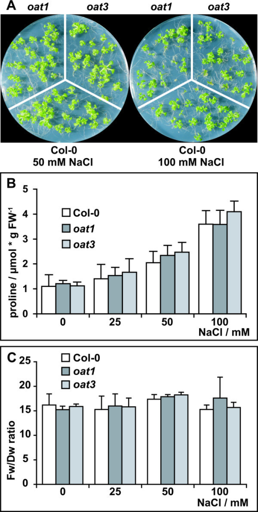 oat mutants display the same salt stress responses as wildtype plants. A: Col-0 wildtype, oat1 and oat3 were grown for three weeks in sterile culture on MS medium supplemented with 60 mM sucrose and increasing amounts of NaCl. B: Free Pro levels in 3-week-old plants. C: Fw/Dw ratios of plants cultivated under the same conditions. Columns represent the average of 3 (C) or at least 4 (B) independent biological replicates, error bars indicate SD.
