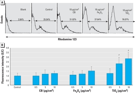 "ROS levels after exposure of neuronal networks to different concentrations of CB, Fe2O3, or TiO2 NPs for 24 hr. (A) Cell autofluorescence (""Blank"") and the changes in fluorescence intensity and peak distribution of rhodamine 123 analyzed by flow cytometry (DHR assay), in control cells and in cells exposed to NPs. (B) ROS formation in neuronal cells after exposure to different concentrations (0.5–10 μg/cm2) of NPs. Values shown are the mean ± SD of experiment/control (E/C) data from three independent experiments (and preparations) performed in triplicate.#p < 0.001."