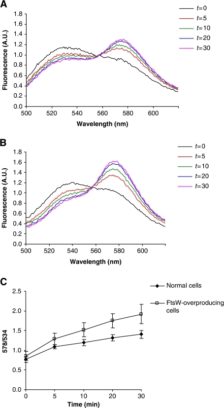 Expression of FtsW increases the translocation of NBD-Lipid II from the inner to the outer leaflet of the bacterial membrane. Generation of a FRET signal was monitored over time in RSO vesicles prepared from wild-type TOP10F' strain (A), and TOP10F' harbouring a plasmid encoding His-tagged FtsW, where the expression of the ftsW gene is under the control of an IPTG-inducible promoter (B). The time course of fluorescence was monitored during 30 min. Assaying the wild-type strain yielded a gradual increase in the FRET signal in time (A). Overexpression of the ftsW gene causes a significant increase in the FRET signal (B). Background signals obtained from RSO vesicles, where neither NBD-UDP-MurNAc-pentapeptide nor UDP-GlcNAc were incorporated and were subtracted from each measurement. Synthesis of NBD-Lipid II in the vesicles was monitored using TLC. All measurements are representative of at least three independent experiments. A.U.: arbitrary units. (C) The time course of the FRET signal in (A) and (B) displayed as a 578/534 ratio, where 578 nm is the emission maximum of vancomycin-TMR and 534 nm is the emission maximum of NBD-Lipid II. Error bars represent s.d. of the mean value of the ratios measured at 578±5 and 534±5 nm.