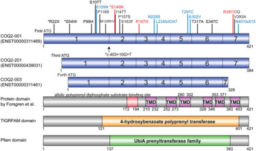 COQ2variants and transcripts. The upper three panels in blue represents the protein coding transcripts of the COQ2 gene and the exons are numbered (transcripts which cause nonsense mediated decay or transcripts which produce no protein are not shown). Transcripts and protein domains are referred to Ensemble (http://useast.ensembl.org/index.html) and 1000 Genomes (http://www.1000genomes.org/home). The lower three panels represent the protein domains and motifs by Forsgren and colleagues [14], TIGRFAMs database (http://www.tigr.org/TIGRFAMs) [15] and Pfam database (http://pfam.xfam.org/) [16]. There were no transcripts which start from second ATG. Red box indicates the allylic polyprenyl diphosphate substrate-binding site. Purple Boxes indicate the six transmembrane domains (TMD) predicted. The orange box and green box show the areas of 4-hydroxybenzoate polyprenyl transferase (Accession: TIGR01474) and UbiA prenyltransferase family (Accession: PF01040) respectively. Potential risk variants and p.R22X shown in black were identified in multiple system atrophy (MSA) [4, 13, 17]. p.R22X only exists on the longest isoform, COQ2-001, and does not associated with MSA. †ENST00000439031 was missing in the latest Ensembl release 77 - October 2014. *Asterisks indicate variants found in our MSA series. Arrow shows an intronic variant, c403 + 10G > T (Exon1 + 10). Mutations in blue were identified in primary coenzyme Q10 (CoQ10) deficiency [5–12]. Mutations in red (p.S146N, p.R197H and p.R387X) were identified both in MSA and primary CoQ10 deficiency [4, 6, 8, 13].