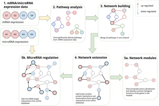 Integrative network-based analysis. This overview figure highlights the different steps in the integrative network-based analysis used in this study. The goal is to integrate different omics data sets like mRNA and microRNA expression data (1). First, the mRNA expression data were analysed using biological pathways and significantly altered pathways were identified (2). The selected pathways were then merged into one network (3). In the next step, the network was extended with protein–protein and transcription factor–gene interactions with other differentially expressed genes that are not present in the pathways (4). The extended network was used to first identify active modules (5a), and then, it was extended with microRNA regulation, which allowed the integration of microRNA expression data (5b)