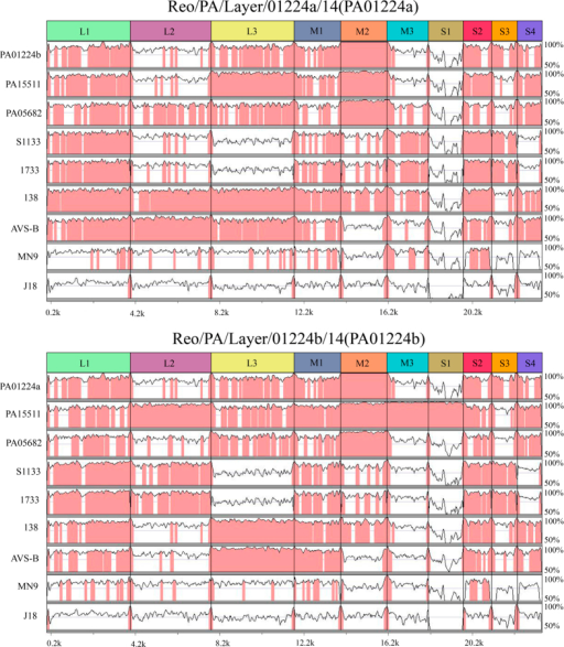 The mVISTA method for whole-genome nucleotide alignment.(A) Alignment results of the Reo/PA/Layer/01224a/14 variant strain in comparisons with the Reo/PA/Layer/01224b/14 variant strain and other 7 ARV reference strains (PA15511, PA05682, S1133, 1733, 138, AVS-B, MN9 and J18); (B) Alignment results of the Reo/PA/Layer/01224b/14 variant strain compared with the Reo/PA/Layer/01224a/14 variant strain and 7 other ARV reference strains (PA15511, PA05682, S1133, 1733, 138, AVS-B, MN9 and J18). The areas in pink represent ≥90% similarities, and the areas in white represent <90% similarities. The scale bar measures the approximate length of the concatenated genome.