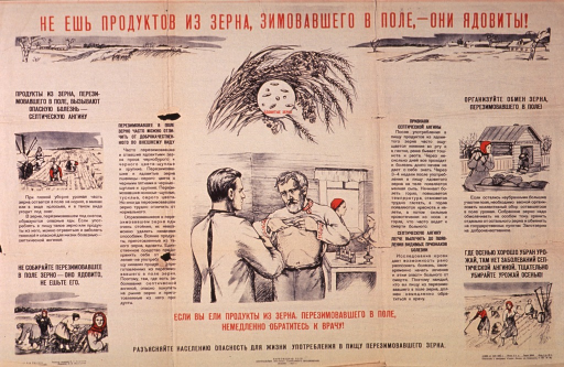 <p>Predominantly tan or discolored white poster with red and black lettering.  All lettering in Cyrillic script.  Title at top of poster deals with not eating wheat that has been left in the field through the winter as it is poisonous or toxic.  Visual images are illustrations of wheat, fields in winter, people harvesting grain both in autumn and winter, and a man lifting his shirt to show a rash or skin condition to a doctor.  Picture caption below illustration with the man and doctor urges seeking immediate medical attention.  Additional text on poster mentions &quot;septic angina.&quot;  This may refer to alimentary toxic aleukia or streptococcal sore throat.  Publisher information at bottom of poster.</p>