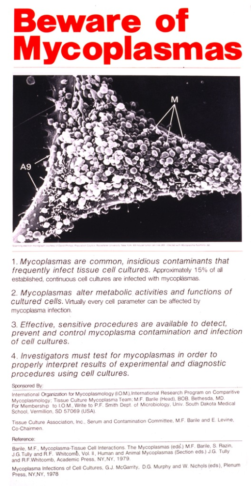 <p>The top part of the poster is a scanning electron micrograph of a mouse tumor cell infected with mycoplasma hyorhinis.  The remainder of the poster consists of information about mycoplasmas and the sponsors.</p>