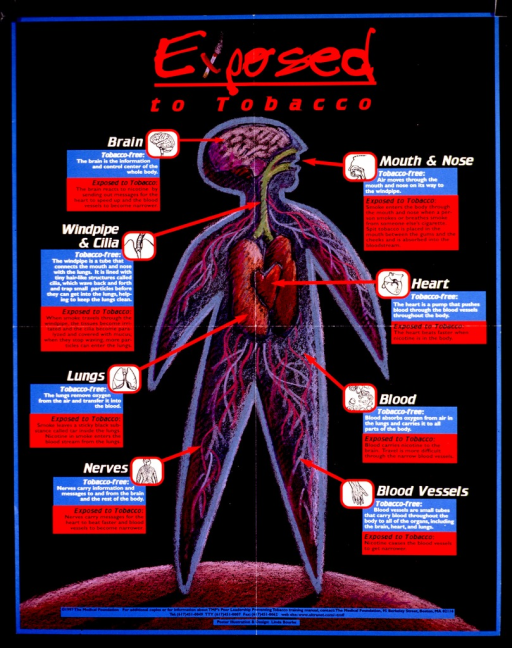 <p>Multicolor poster.  Title at top of poster.  The &quot;x&quot; in exposed incorporates an illustration of a burning cigarette.  Dominant visual image is a cut-away illustration of a human body, showing organs and systems affected by tobacco smoke.  Surrounding the illustration are descriptions of how the body parts function normally contrasted with their function when exposed to tobacco.  Publisher information at bottom of poster.</p>