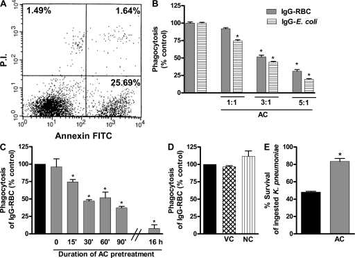 Efferocytosis inhibits FcR-mediated phagocytosis and bacterial killing by AMs. (A) Jurkat T cells were incubated with 8 μg/ml camptothecin for 5 h and apoptotic cells were detected by AnnexinV-FITC/PI and analyzed by flow cytometry. Early ACs represent 25.69% of cells. (B) Phagocytosis of IgG RBCs or IgG E. coli was determined after a 90-min pretreatment with ACs at the indicated AC/AM ratios. (C) Phagocytosis of IgG RBCs was determined after pretreatment for the indicated times with ACs added at a ratio of 3:1. (D) Phagocytosis of IgG RBCs was determined after a 90-min pretreatment with viable (VC) or necrotic (NC) Jurkat cells added at a ratio of 3:1. (E) AMs were preincubated with or without ACs (3:1) for 90 min and then infected with K. pneumoniae (50:1). Microbicidal activity was determined and expressed as the percentage survival of ingested bacteria. Results represent the mean ± SEM from three independent experiments, each performed in quintuplicate (B–D) or the mean ± SEM of quintuplicate values from a single experiment representative of three independent experiments (A and E). *, P < 0.05 versus control.
