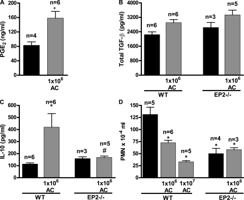 PGE2/EP2 signaling impairs PMN recruitment and promotes in vivo generation of IL-10 in a mouse model of pneumococcal pneumoniae. 106 apoptotic thymocytes were instilled intranasally in WT and EP2−/− mice and, 16 h later, 106 CFU S. pneumoniae were administered intratracheally. (A–C) PGE2 (A), total TGF-β (B), and IL-10 levels (C) were quantified in the supernatant of lung homogenates from animals studied in Fig. 4 (C and E). (D) PMNs in BALF from WT and EP2−/− mice were counted. Results represent the mean ± SEM of one experiment representative of two (A–C) or of one experiment (D). The number of animals analyzed in each group is indicated above each bar. *, P < 0.05 versus control; #, P < 0.05 versus AC.