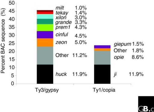 Retrotransposons collectively comprise 76% of the maize genome. In this preliminary analysis of the draft genome sequence by Josh Stein (MGSC, Cold Spring Harbor Laboratory, Cold Spring Harbor, USA) it is clear that just the gypsy family huck element plus the copia relative ji make up nearly one-quarter of the genome - about 600 Mb. Image courtesy of Richard Wilson and Josh Stein.