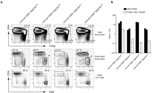 ThPOK is dispensable for differentiation of CD4SP thymocytes(a) HSA and TCRβ expression in total thymocytes (top), and CD4 and CD8 expression in HSAlo/− TCRβhi mature thymocytes (middle) and TCRβ+B220− peripheral T cells (bottom) in the absence of ThPOK, CBFβ, or both. The CD4−CD8+ cells shown with asterisks in Lck-cre+CbfbF/F and Lck-cre+CbfbF/FZbtb7bGFP/− panels are those that escaped Cre-mediated inactivation of Cbfb and hence have normal Cd4 silencing. Data shown here are representative from two independent experiments with similar results. (b) Absolute numbers of HSA+CD69+ positively selected thymocytes and HSAlo/− mature CD4SP thymocytes in the absence of ThPOK, CBFβ, or both. Each column shows cell numbers in a mouse with each of the genotypes.