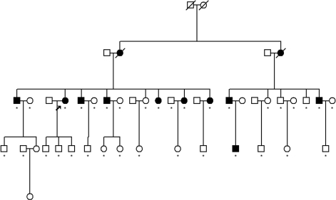 Family structure of pedigree C. Star mark represents individuals with collected DNA samples conducted in genome wide scan and fine mapping. No star mark represents individuals without collected DNA samples who were unwilling to donate their blood. The proband is marked with an arrow.