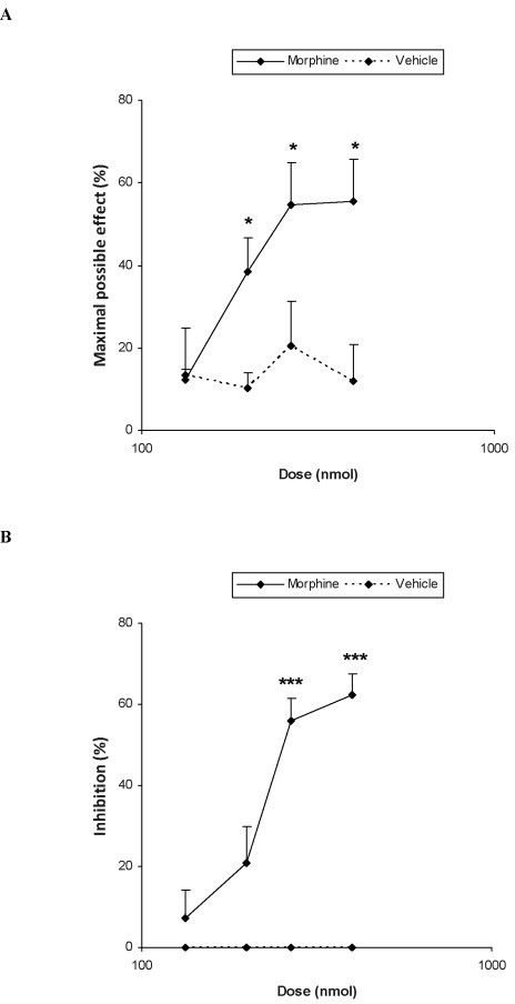 Antiallodynic effects of morphine. Effects of the subplantar administration of different doses (logarithmic axis) of morphine or vehicle on the mechanical (A) and thermal allodynia (B) induced by CCI in the ipsilateral paw of WT mice at 21 days after surgery. Morphine was administered 20 min before starting behavioral testing. Data are expressed as mean values of maximal possible effect (%) for mechanical allodynia and inhibition (%) for thermal allodynia ± SEM (5-6 animals for dose). In both tests, for each dose, * P <0.05 and *** P <0.001 denote significant differences between morphine and vehicle treated animals (Student's t test).