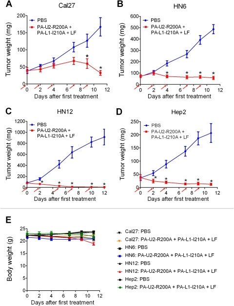 Tumoricidal activity of intermolecular complementing PA to human HNSCC.Nude mice bearing intradermal Cal27 (A), HN6 (B), HN12 (C), and Hep2 (D) HNSCC xenografts were injected intraperitoneally with either PBS (blue lines) or PA-U2-R200A + PA-L1-I210A + LF (red lines) at the time points indicated by the red arrows. (E) Body weight change over time in all groups. The data are expressed as mean tumor weight ± standard error of the mean; *, P<0.01. Ten mice were used per tumor and treatment group.