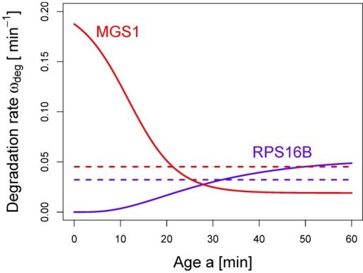 Effective degradation rate  as a function of the age a of an mRNA.The lifetime distribution of an mRNA can be translated into an age-dependent degradation rate  via Eq. (4). Here, we illustrate the change of the degradation rate during the lifetime of an mRNA for the two decay patterns shown in Fig. 3. For the mRNA encoding MGS1 (red), the degradation rate is high for young mRNAs and decreases to a constant value after some transient time. In contrast, for RPS16B mRNA (blue), the degradation rate is close to zero upon birth of the mRNA and increases gradually to a constant value. For comparison, the constant rates corresponding to a fit of the decay data with purely exponential functions (dashed lines) are also included.
