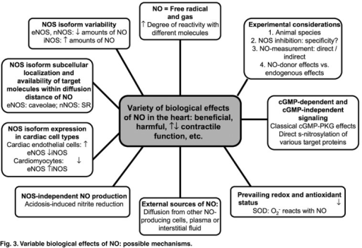 Variable biological effects of NO: possible mechanisms.