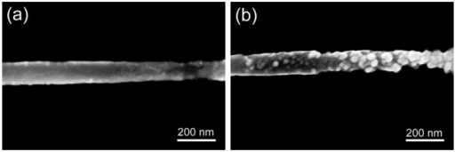 Scanning electron microscopy (SEM) images of single PANI nanowires. (a) before the surface functionalization and (b) after the surface functionalization with cTnI mAbs. The two SEM images were taken at the same location of the nanowire.