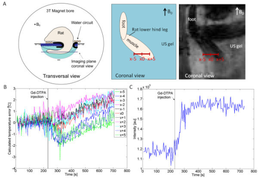The effect of Gd injection in vivo. (A) Schematic drawings of the animal orientation in transversal and coronal directions, and a magnitude image of the rat hind leg as obtained with the PRFS thermometry sequence (coronal view). The red scale bar indicates the voxel locations in plot B. (B) The perceived temperature baseline error over time in vivo over a horizontal line profile in the rat muscle. (C) PRFS voxel signal intensity data obtained at x0 indicating the inflow of Gd-DTPA into the rat hind leg muscle.