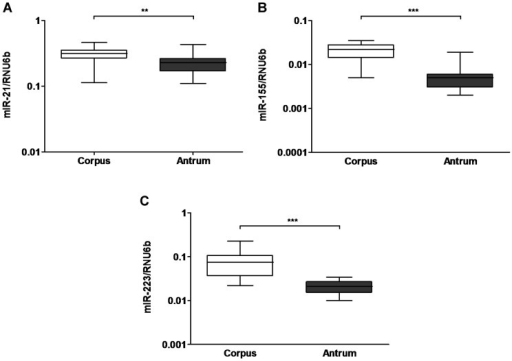 Regional differences in miRNA expression in the stomach mucosa.Expression of miR-21 (A), miR-155 (B) and miR-223 (C) were evaluated in paired corpus and antrum samples of the stomach (each n = 19). The values represent 2ΔdCt-values normalized to RNU6b. ***-p < 0.0001; scatter-plot, horizontal line represent medians.