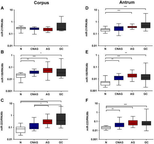 miRNA expression alterations in chronic gastritis and preneoplastic mucosal conditions.The expression of miR-21, miR-155 and miR-223 is shown as 2ΔdCt-values normalized to RNU6b for corpus (A–C) and antrum (D–F), respectively. N – controls (n = 19); CNAG – chronic non-atrophic gastritis (n = 25); AG – atrophic gastritis (n = 20); GC- tumor free antrum (n = 16) or corpus (n = 14) tissue from patients with gastric cancer. ***-p < 0.0001; **-p < 0.001; *- p < 0.05.