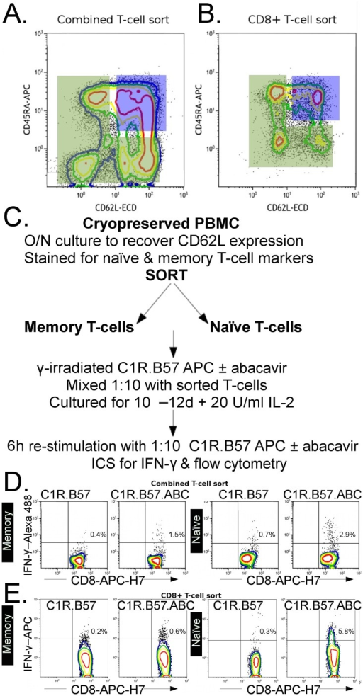 Assessment of abacavir responsive memory or naïve T cells.A. Sorting gates used to collect total CD4+ and CD8+ memory phenotype (green polygon) and naïve phenotype T cells (blue rectangle) or B. CD8+ memory or naïve phenotype T cells only. C. Protocol used for the selection, priming and re-stimulation of sorted naïve and memory T cells from cryopreserved HLA-B*57:01 positive donor PBMC. D. Representative plots of in-vitro cultures of HLA-B*57:01 positive memory (left most pairs of plots) or naïve (right most pairs of plots) phenotype T cells derived from sorting strategy A. Cultures were re-stimulated with APCs treated with abacavir (C1R.B57.ABC) or untreated (C1R.B57), respectively. E. Representative plots of in-vitro cultures of HLA-B*57:01 positive memory (left most pairs of plots) or naïve (right most pairs of plots) phenotype CD8+ T cells derived from sort strategy B. Cultures were re-stimulated with APCs as described above.