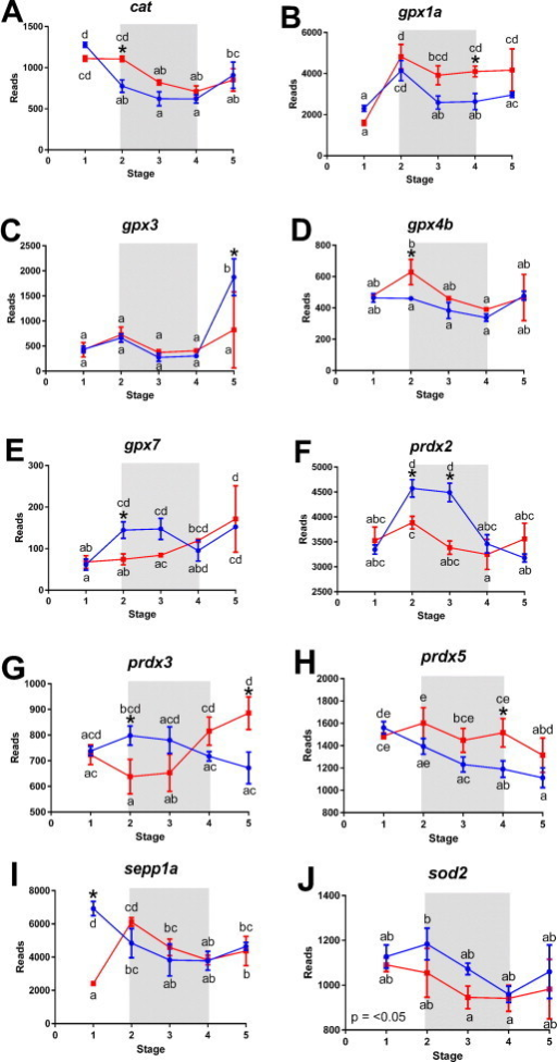 The effect of diet on the expression of antioxidant coding genes in cod larvae.The mRNA expression of catalase (A), glutathione peroxidase 1a (B), 3 (C), 4b (D), 7 (E), peroxiredoxin 2 (F), 3 (G), 5 (H), selenoprotein p1a (I) and superoxide dismutase 2 (J) in developing cod larvae fed either rotifers (□ red line) or copepods (○ blue line). Shaded areas cover life stages that copepod-fed larvae had elevated growth rates compared to rotifer-fed larvae. Letters indicate statistical relationships between all data points, with * and p values indicating statistical factorial and main effects, respectively, of diet (p<0.05). See Fig. 1 for more details. Data are mean±SEM, n=3.