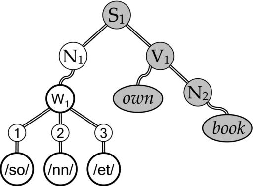 "The neural sentence representation of Sonnet owns book, by combining a phonological neural blackboard with the neural (sentence) blackboard in Fig. 5. The phonological neural blackboard binds the familiar phonemes/morphemes /so/, /nn/ and /et/ to a 'word assembly' W1, which binds to the sentence structure Sonnet owns book (after van der Velde and de Kamps 2006b). The gray ovals and circles are activated by the question ""Who owns the book?"""