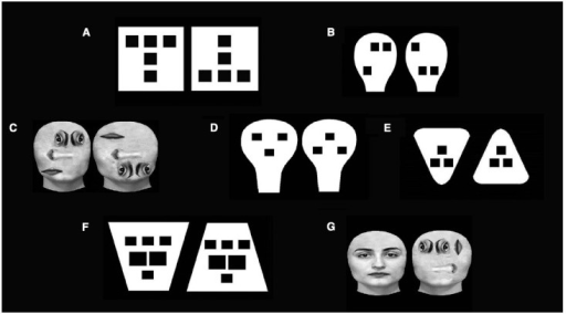 Examples of stimuli employed by to test the role of general structural properties in face preference. (A,B) stimuli used to test up-down asymmetry (Simion et al., 2002; Turati et al., 2002); (C) real faces employed to test up-down asymmetry (Macchi Cassia et al., 2004); (D–F) stimuli used to test congruency (Macchi Cassia et al., 2008); (G) real faces employed to test up-down asymmetry and congruency (Macchi Cassia et al., 2004).