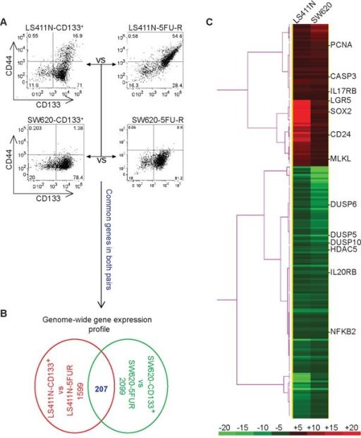 Genome Wide Gene Expression Profiles Of Colon Cancer St Open I