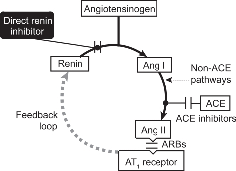 Concept Map Renin Angiotensin Aldosterone Mechanism.The Renin Angiotensin Aldosterone System And Points Of Open I