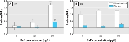 Mitochondrial and nuclear DNA damage in killifish larvae 4 days after repeated 24-hr exposures to DMSO vehicle or BaP (100 or 200 μg/L). Frequency of lesions in (A) KC larvae and (B) ER larvae. KC larvae showed a significant increase in relative lesion frequency in both mitochondrial and nuclear DNA after exposure to 200 μg/L BaP (p ≤ 0.001). The ER larvae showed no significant increase in either mitochondrial or nuclear DNA lesion frequency for any of the concentrations of BaP examined; ER vehicle controls showed a significantly higher level of mitochondrial DNA lesion frequency than KC larvae (p < 0.05). Data are mean lesion frequency ± SEM; n = 4 pools of two larvae per treatment group.**p < 0.001 compared with control by Bonferroni-corrected ANOVA.