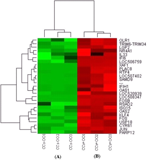 Hierarchical clustering and heat map of the top differentially expressed genes between CCs cultured with (red bar) or without (green bar) their enclosed oocytes with a fold change of more than 16. Abbreviations, CCs + OO and CCs - OO stand for cumulus cells cultured with or without ooplasm, respectively. Numbers (1, 2 and 3) indicate the three biological replicates that were used for microarray hybridization.