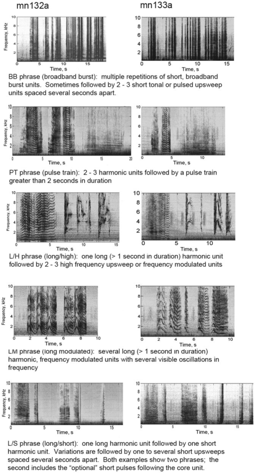 Examples of the most common phrases for each recording.Spectrograms were generated in Matlab (Hamming window, FFT size 2048, 50% overlap).