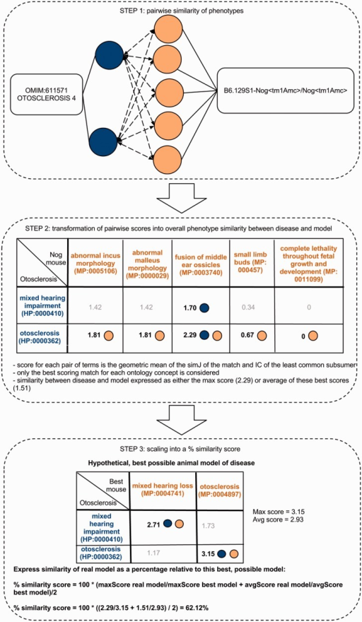 Determining the phenotype similarity of two entities, e.g. a mouse model and a disease, is a three-step process in our method. The first step is the alignment of ontology concepts based on OWLSim and assigning scores to individual pairs of ontology concepts as illustrated in the top panel of this figure. In a second step, the best scoring matches for each of the annotated ontology concepts are identified and the overall phenotype similarity score described as either the maximum or mean of these scores. In a third step, we scale these two measures relative to their maximum possible values and calculate a single combined percentage score.
