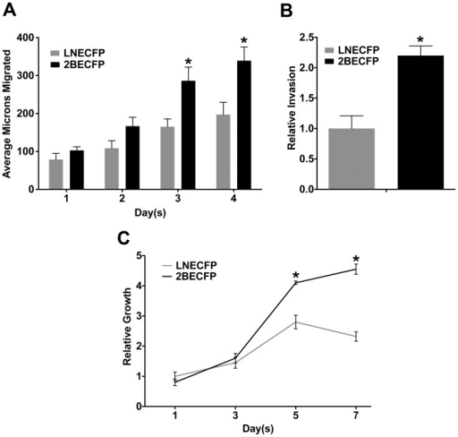 Overexpression of beta-2 enhances LNCaP cell migration, invasion, and growth on laminin.A. Quantified results of wound healing migration assays performed on 60 mm dishes pre-coated with 0.5 µg/mL laminin. 2BECFP cells exhibit a trend in increased migration on laminin compared to LNECFP cells beginning at day 1, with statistical significance achieved at days 3 and 4 (P<0.05, n = 5). B. LNCaP cells engineered to overexpress beta-2 have a 2.2 fold increase in invasion through 50 µg/ml laminin compared to vector control LNCaPs (P< 0.05, n = 3). C. Quantified results of MTT assays on 0.5 µg/mL laminin. 2BECFP cells have a statistically significant growth advantage on laminin relative to LNECFP cells beginning at day 5 (P< 0.05, n = 5).
