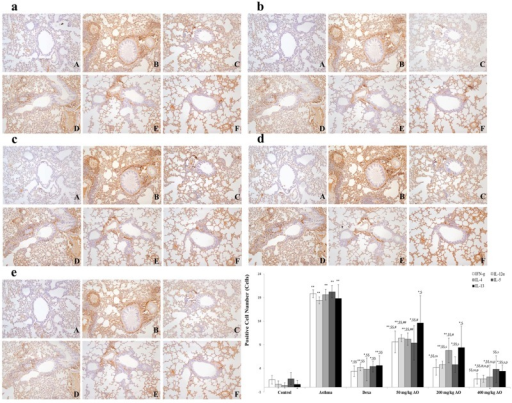 AO reduced the expression of Th1- and Th2-related cytokines.OVA induced the expression of Th1- and Th2-related cytokines. AO reduced the expression of Th1-related cytokines, such as (a) IFN-γ and (b) IL-12α, and Th2-related cytokines, such as (c) IL-4, (d) IL-5, and (e) IL-13, in the lungs. Immunopositive cells were counted in five randomly selected non-overlapping fields (×200 magnification) of three separately immunostained lung sections per animal. A, vehicle control; B, asthma induction; C, dexamethasone; D, 50 mg/kg/day AO; E, 200 mg/kg/day AO; F, 400 mg/kg/day. *p<0.05 vs. control; **p<0.001 vs. control; $p<0.05 vs. asthma induction; $$p<0.001 vs. asthma induction; #p<0.05 vs. dexamethasone; ##p<0.001 vs. dexamethasone; sp<0.05 vs. 50 mg/kg/day; ssp<0.001 vs. 50 mg/kg/day; pp<0.05 vs. 200 mg/kg/day; ppp<0.001 vs. 200 mg/kg/day; ¥p<0.05 vs. 400 mg/kg/day; ¥¥p<0.001 vs. 400 mg/kg/day.