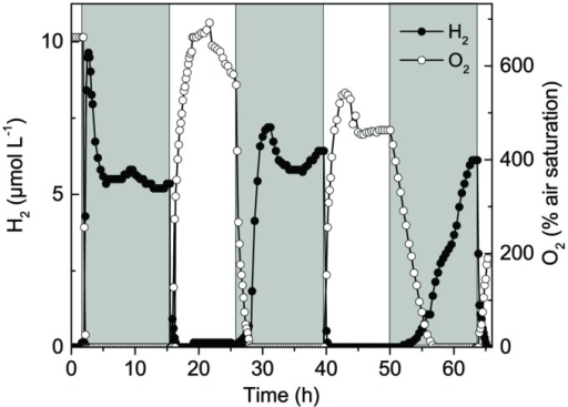 Long-term measurements of H2 and O2 concentration at 0.8 mm depth in a hypersaline cyanobacterial mat sample incubated under a 14 h light (800 μmol photons m-2 s-1) and 10 h dark cycle.