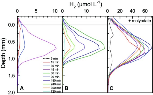 Accumulation and depletion of H2 in a coastal cyanobacterial mat as a function of time after darkening (see numbers and color legends in the graph). Prior to darkening, the mat was incubated under a photon irradiance of 500 μmol photons m-2 s-1 in aerated seawater for 8 h without (A,B) and for 6 h with 2.5 mM molybdate (C). Note the use of different concentration ranges in the different panels.