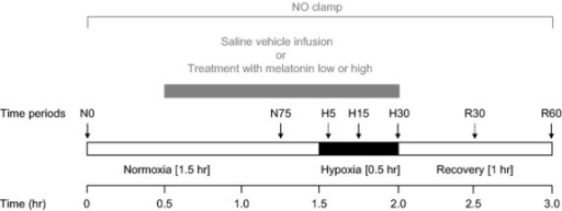 Diagrammatic representation of the experimental protocol. The experimental protocol consisted of a 3-hr period divided into the following: 1.5-hr normoxia, 0.5-hr hypoxia (black bar), and 1-hr recovery, during saline vehicle infusion (n = 6), treatment with melatonin low (0.05 ± 0.01 μg/kg/min; n = 6), treatment with melatonin high (0.5 ± 0.1 μg/kg/min; n = 6), or treatment with melatonin high during nitric oxide (NO) blockade with the NO clamp (n = 6; gray bar). Arrows represent times at which arterial blood samples were collected.