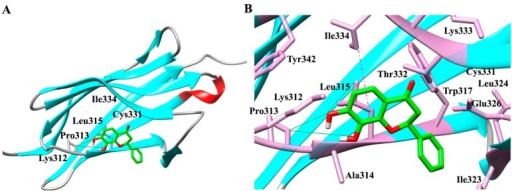 Interaction and binding mode of 7,8-dihydroxyflavone (7,8-DHF) with TrkB and VEGFR2. (A) Docking of TrkB (ribbon structure) with the 7,8-DHF (wire-frame) showing critical residues involved in interaction; (B) Enlarged view of the interaction pocket within 5.5 Å around the ligand, 7,8-DHF-TrkB complex; (C) Docking of VEGFR2 (ribbon structure) with the 7,8-DHF (wire-frame) highlighting important residues involved in interaction; (D) Enlarged view of the interaction pocket within 5.5 Å around the ligand, 7,8-DHF-VEGFR2 complex. Red (α-helix), cyan (β-sheets) grey (random coil). Green strong line denotes the hydrogen bonding and pink dashed line reflects pi–sigma interactions and stacking. The images were generated with the Discovery Studio 4.0 Client (Accelrys, Inc., San Diego, CA, USA).