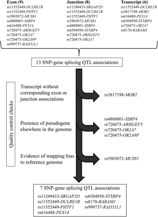 Flowchart for determining splicing QTL associations. We identified 13 SNP-gene associations through exon, junction and whole-transcript association tests with risk-associated SNPs; several associations were identified by multiple methods. After excluding SNP-gene associations that could not be corroborated with other tests, that could be related to the presence of pseudogenes or paralogs or that could have derived from mapping bias to the reference genome, seven SNP-gene associations remained.
