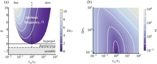 The type of w-current depends on the values of the intrinsic parameters.(a) Intrinsic parameter phase diagram in (τw/τV, g). w can be depolarizing (g < 0) or hyperpolarizing (g > 0). w contributes an intrinsic frequency to the model in the colored region. The dynamics are unstable if g < −1. Iso-Ω lines are shown in white ( for large τw and  for small τw). (b) When , the phase diagram can be cast in (τw/τV, ΩτV)-space. Iso-g lines are shown in white. (See [29] for a similar plot).