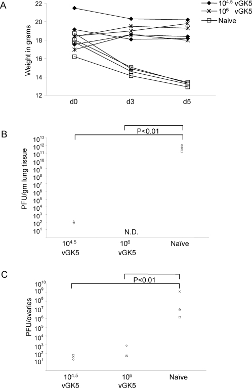 Mice immunized with vGK5 are protected from a lethal challenge with VACV-WR.Mice were infected with 104.5, 106 PFU of vGK5 (n = 3/group) by the intranasal route. 1 month later immunized mice and age matched naïve controls were challenged with a lethal dose of VACV-WR (106 PFU) by the i.n. route. (A) Weights of mice were monitored over 5 days. Viral titers were measured in the (B) lungs and (C) ovaries and expressed as viral titers/gm lung tissue or ovaries. Each symbol represents the titer obtained in target organs of individual mice.
