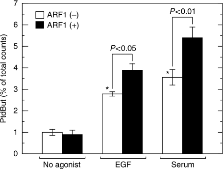 Serum induces association of CtBP1/BARS with native PLD. After serum starvation for 16 h, COS7 cells were stimulated with 100 ng/ml EGF or 10% fetal calf serum for 30 min. Cells were lysed and immunoprecipitated with anti-CtBP1/BARS antibody. Pulled down PLD-associated with CtBP1/BARS was assayed for PtdBut production in the absence or presence of 50 nM ARF. Data presented are means±s.e. of six independent experiments carried out in triplicate. *P<0.05 compared with no addition of agonists.